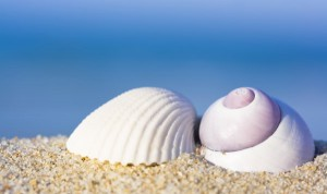 sea shells implants