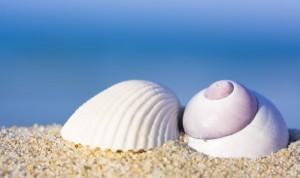 sea shells implants