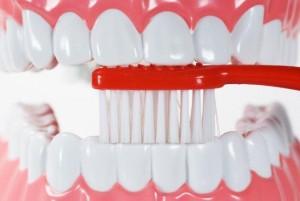 toothbrush hard